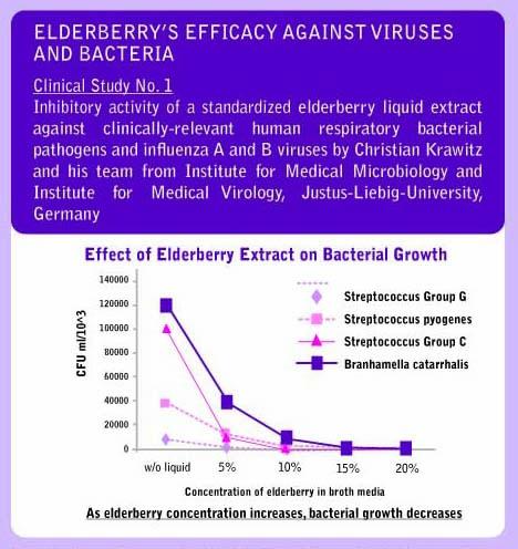 ElderberryCllinical1